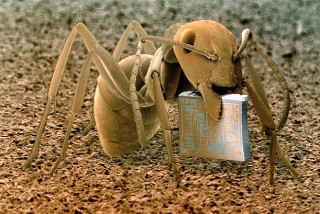 kiến chui vào ổ cứng